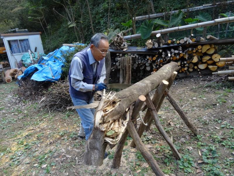 枯れ松 大木の伐採準備・・・孝子の森_c0108460_18095391.jpg