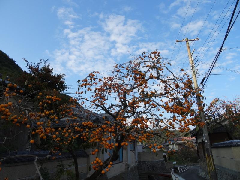 枯れ松 大木の伐採準備・・・孝子の森_c0108460_18152403.jpg