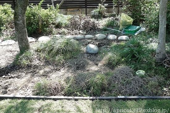 晩秋の庭しごと 低木と宿根草の植えつけ_c0293787_11553575.jpg