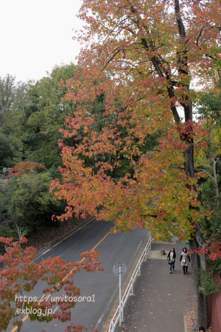 いまの秋景_b0324291_23594874.jpg