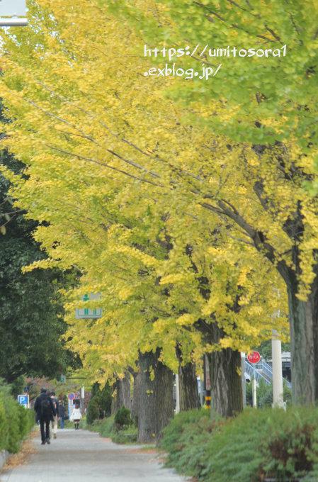 いまの秋景_b0324291_23594936.jpg