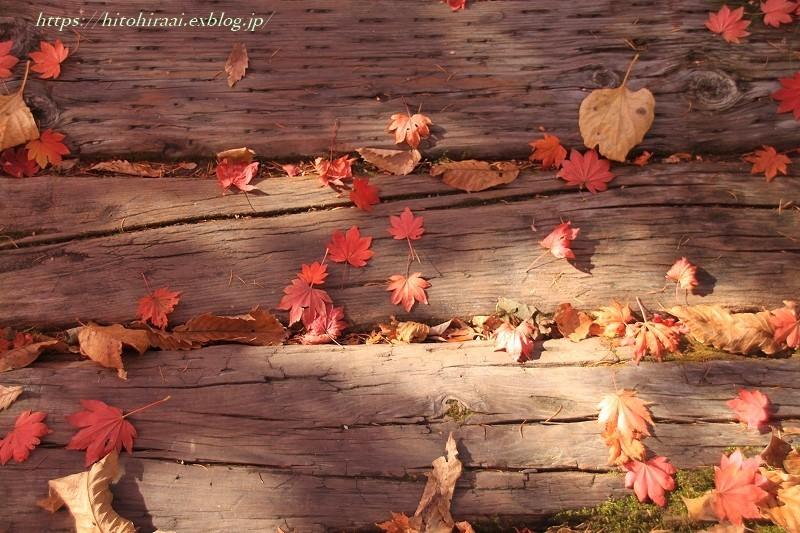 八ヶ岳倶楽部の紅葉 ② 雑木林を散策_f0374092_16493519.jpg