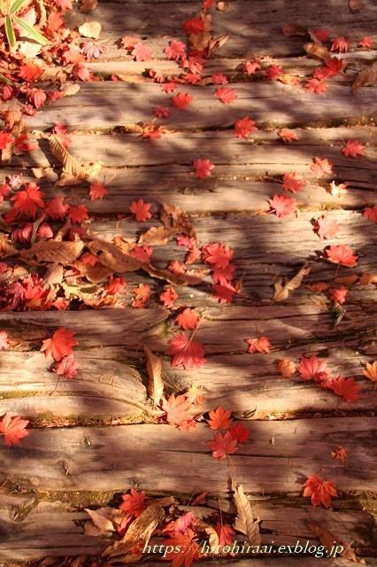 八ヶ岳倶楽部の紅葉 ② 雑木林を散策_f0374092_16520719.jpg