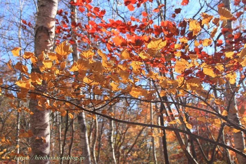 八ヶ岳倶楽部の紅葉 ② 雑木林を散策_f0374092_17173526.jpg