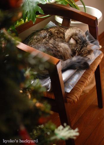 クリスマスツリーを設置しました♪_b0253205_08230425.jpg