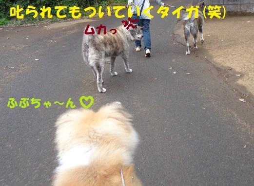 f0121712_14042758.jpg
