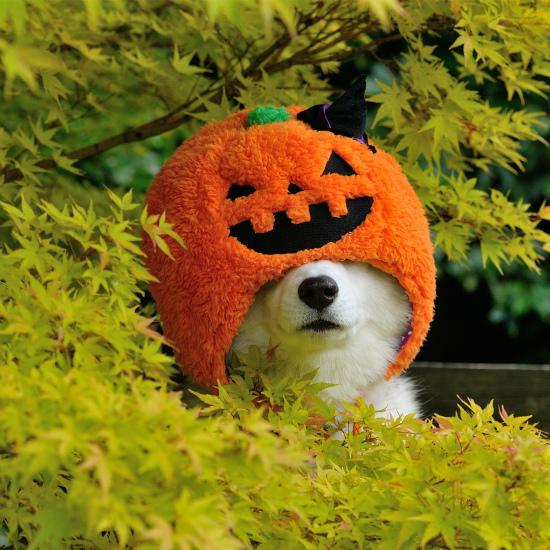 かぼちゃいろは_a0047325_23061157.jpg