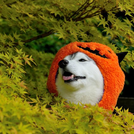 かぼちゃいろは_a0047325_23063051.jpg