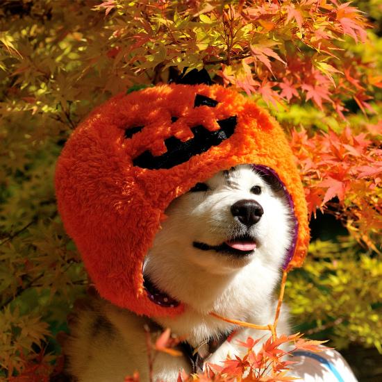 かぼちゃいろは_a0047325_23063644.jpg