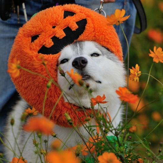 かぼちゃいろは_a0047325_23064209.jpg