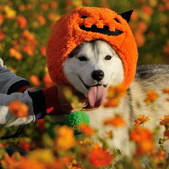 かぼちゃいろは_a0047325_23064760.jpg