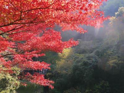 紅葉狩りシーズン到来!!(2018) 菊池渓谷の紅葉は今週末が見ごろです!_a0254656_18160523.jpg