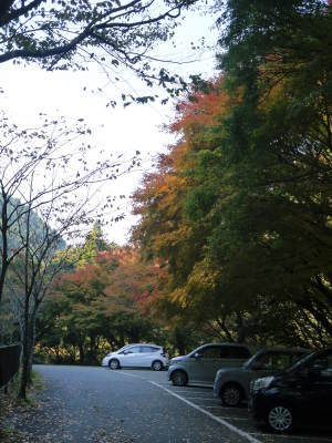 紅葉狩りシーズン到来!!(2018) 菊池渓谷の紅葉は今週末が見ごろです!_a0254656_18172730.jpg