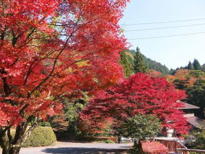 紅葉狩りシーズン到来!!(2018) 菊池渓谷の紅葉は今週末が見ごろです!_a0254656_18204905.jpg