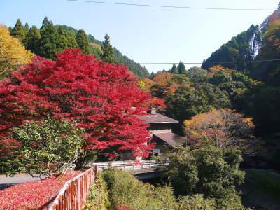 紅葉狩りシーズン到来!!(2018) 菊池渓谷の紅葉は今週末が見ごろです!_a0254656_18255309.jpg