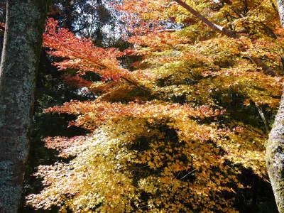 紅葉狩りシーズン到来!!(2018) 菊池渓谷の紅葉は今週末が見ごろです!_a0254656_18503411.jpg