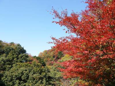 紅葉狩りシーズン到来!!(2018) 菊池渓谷の紅葉は今週末が見ごろです!_a0254656_19064808.jpg
