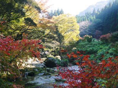 紅葉狩りシーズン到来!!(2018) 菊池渓谷の紅葉は今週末が見ごろです!_a0254656_19103995.jpg
