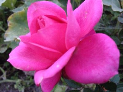 新月目前の美しさ***_e0290872_21164390.jpg