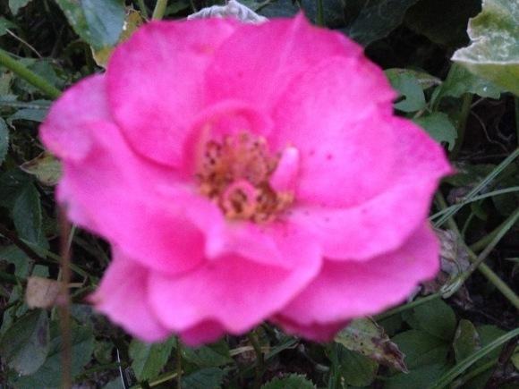 新月目前の美しさ***_e0290872_21242702.jpg