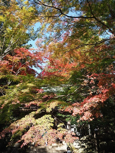 20181104 大窪寺の紅葉_d0156387_18271841.jpg