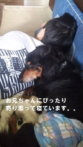 【犬猫・移動先募集】センター(支所)収容(10/27訪問)_f0242002_13202946.jpg