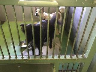 【犬猫・移動先募集】センター(支所)収容(10/27訪問)_f0242002_13551746.jpg