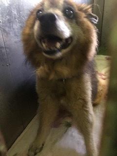 【犬猫・移動先募集】センター(支所)収容(10/27訪問)_f0242002_14023530.jpg