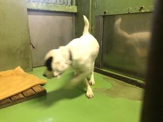 【犬猫・移動先募集】センター(支所)収容(10/27訪問)_f0242002_14114606.jpg