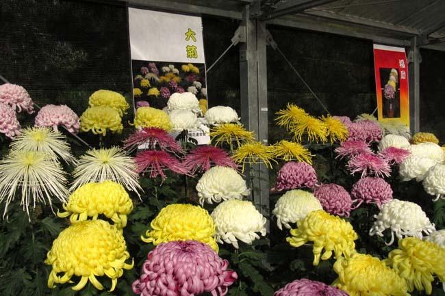 秋の植物園1 花尽くし_e0048413_20380924.jpg