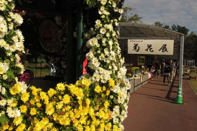 秋の植物園1 花尽くし_e0048413_20381357.jpg