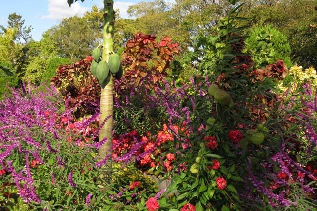 秋の植物園1 花尽くし_e0048413_20381712.jpg
