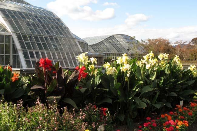 秋の植物園1 花尽くし_e0048413_20382043.jpg