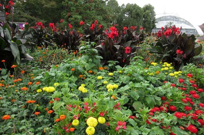 秋の植物園1 花尽くし_e0048413_20382457.jpg
