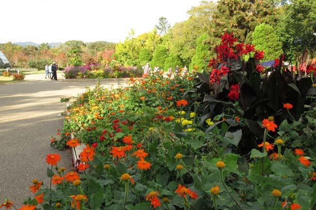 秋の植物園1 花尽くし_e0048413_20382811.jpg