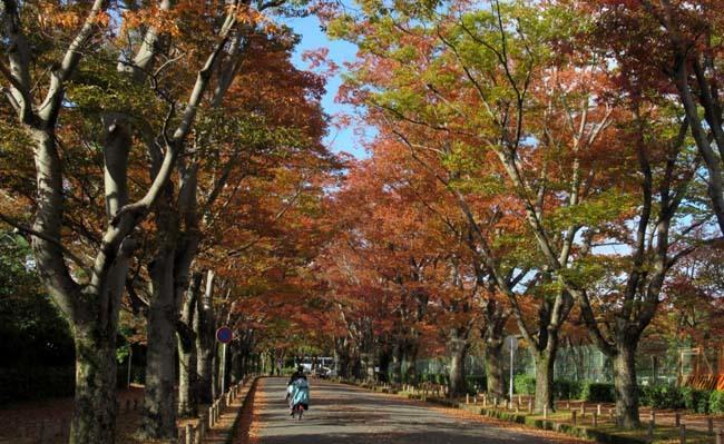 秋の植物園1 花尽くし_e0048413_20383101.jpg