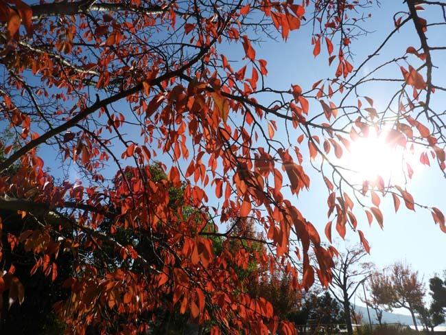 秋の植物園2 紅葉は?_e0048413_21252533.jpg