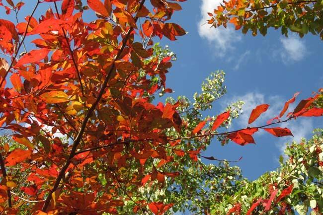 秋の植物園2 紅葉は?_e0048413_21254878.jpg