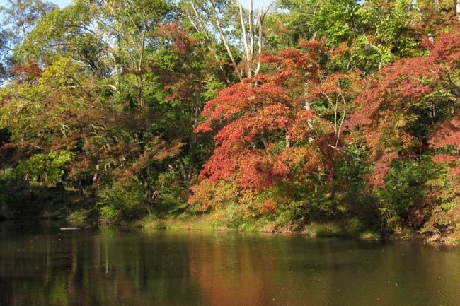 秋の植物園2 紅葉は?_e0048413_21260051.jpg