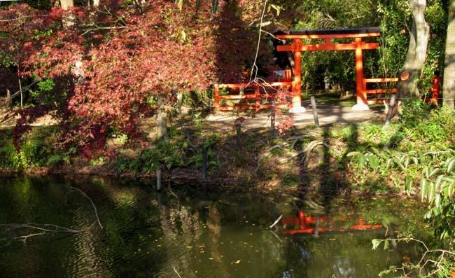 秋の植物園2 紅葉は?_e0048413_21260687.jpg