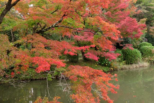 秋の植物園2 紅葉は?_e0048413_21261320.jpg