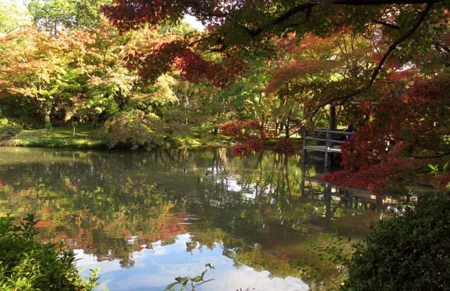 秋の植物園2 紅葉は?_e0048413_21261809.jpg