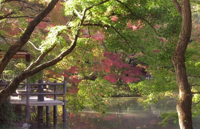 秋の植物園2 紅葉は?_e0048413_21262245.jpg