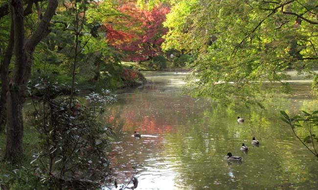 秋の植物園2 紅葉は?_e0048413_21262794.jpg
