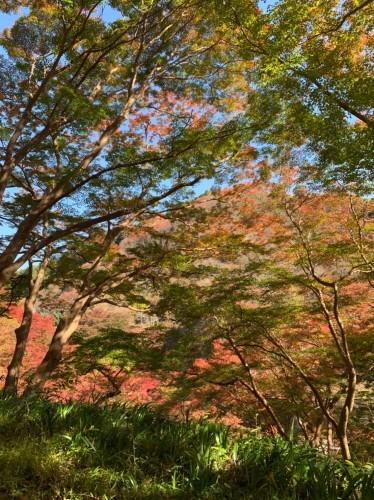奈良県紅葉スポット人気ランキングで吉野山が見事1位です!_e0154524_18250609.jpg