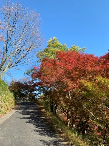 奈良県紅葉スポット人気ランキングで吉野山が見事1位です!_e0154524_18251938.jpg