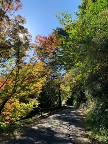 奈良県紅葉スポット人気ランキングで吉野山が見事1位です!_e0154524_18253161.jpg