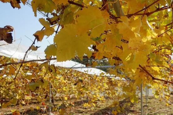 土作り終了 黄葉と紅葉_d0336530_21284429.jpg