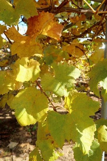 土作り終了 黄葉と紅葉_d0336530_21284908.jpg