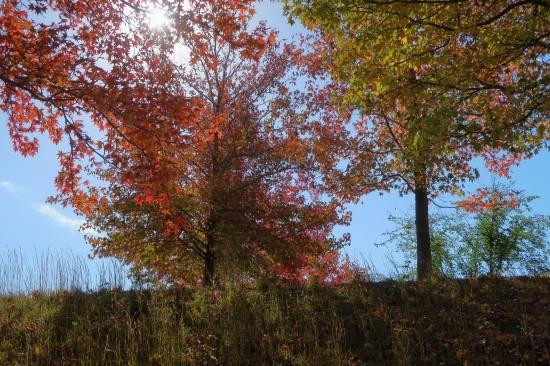 土作り終了 黄葉と紅葉_d0336530_21323387.jpg